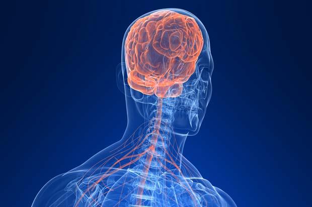 O que é sistema nervoso