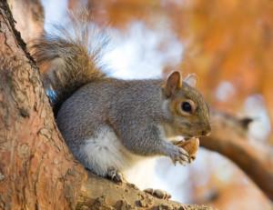 10 Fatos Curiosos sobre animais