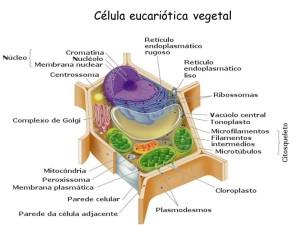Tudo sobre células